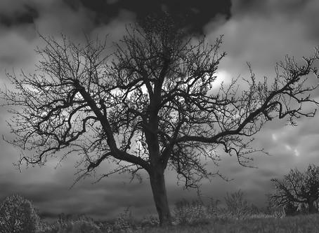 Σταύρος Θάνος | 01.05.2020