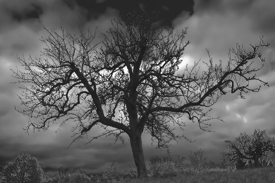 Σταύρος Θάνος | Βιογραφικό