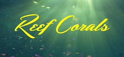 Reef Corals live coral frags coral frags reef corals site logo
