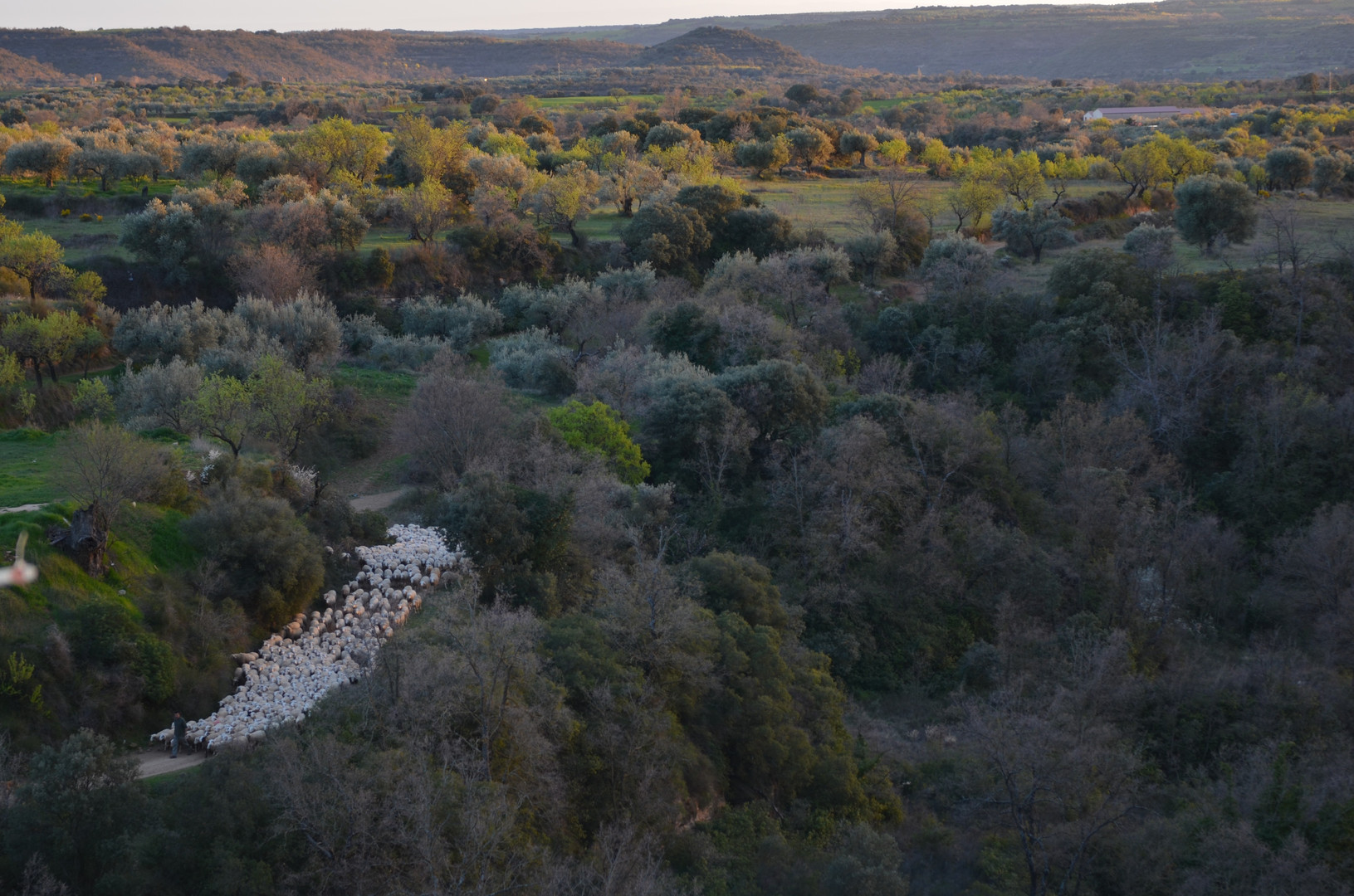 Paisaje Colungo con ovejas