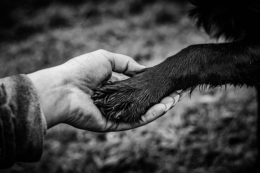 detailed shot of an owner and dogs paw holding hands