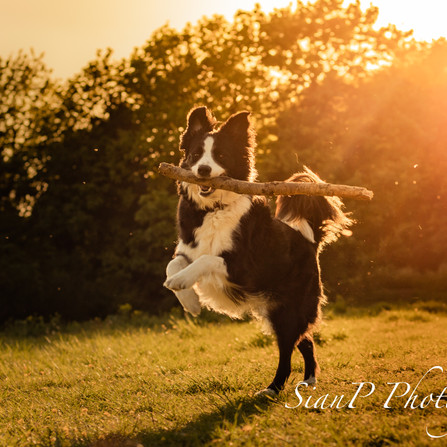 15 top tips on how to take the best pet photographs!
