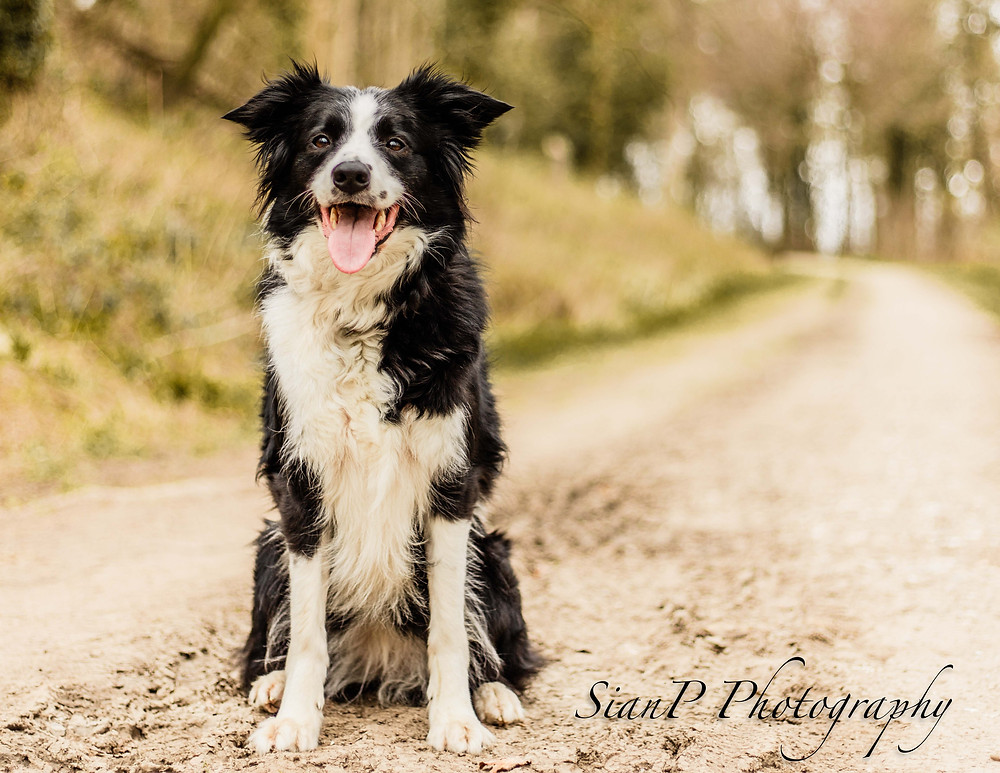 Top tips on how to photographs your pets