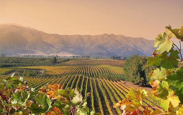 Chilean-vineyard.jpg