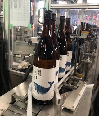 季節限定品「特別純米酒 しぼりたて」☆11月下旬より発売