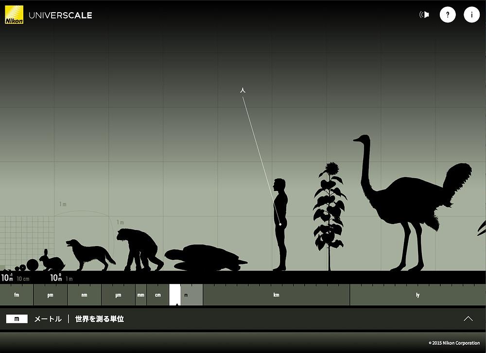 だいたい僕ら人間の大きさがこのくらい。