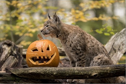Parc Animalier de Sainte Croix : Halloween la fête des six-trouilles