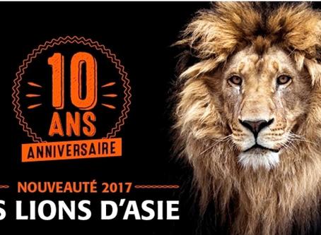 Des Lions d'Asie pour les 10 ans du Zooparc de Trégomeur