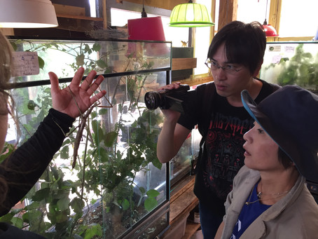 UNE PREMIERE AU PARC ANIMALIER DE SAINTE-CROIX ! Accueil d'une équipe de télévision japonaise Fuji T