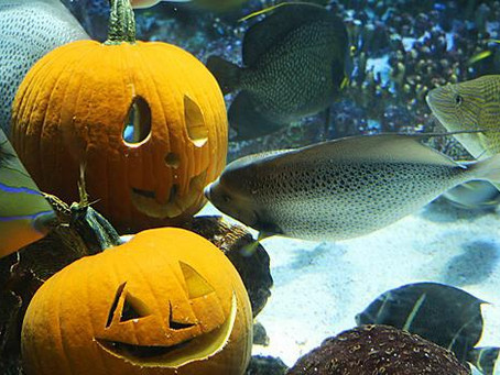 Actualités d'automne pour le Parc Mini-Châteaux et le Grand Aquarium de Touraine