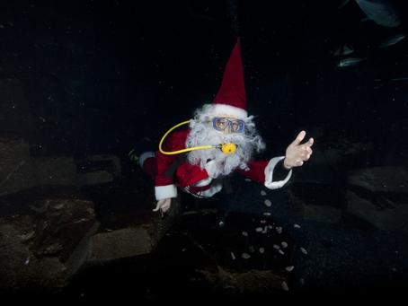 Un Noël féerique à l'Aquarium de Paris
