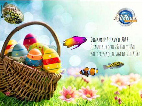 L'Aquarium de Saint-Malo propose des animations gratuites aux visiteurs le dimanche 1er avril