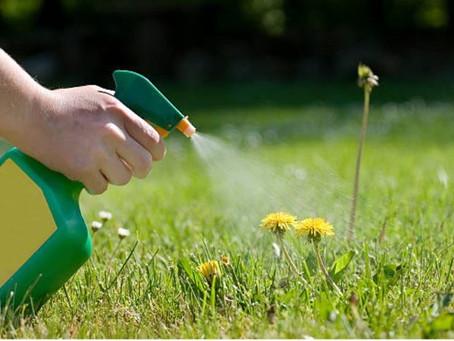 Développement durable - Interdiction des produits phytopharmaceutiques