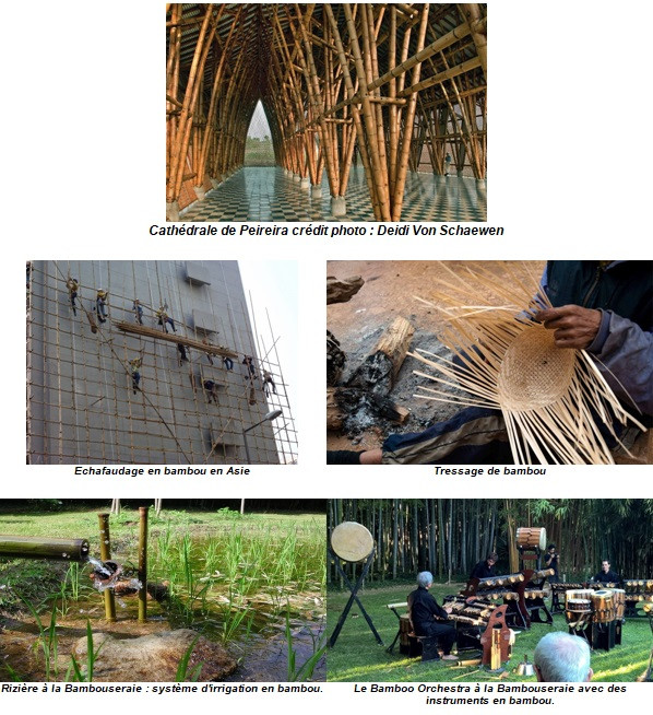 Divers utilisations du bambou