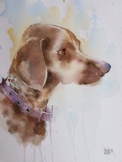 Oliver, a sicilian dog