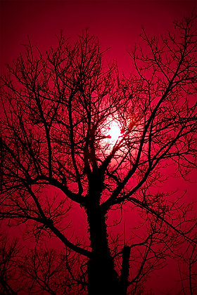 A Blood Red Sky