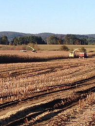 Corn chopping New England