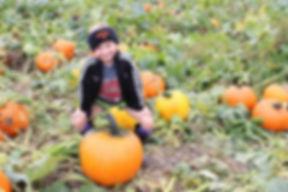 pumpkin upick day
