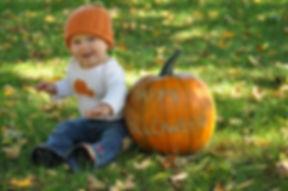 pumpkins wholesale