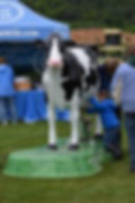 dairy vermont new england