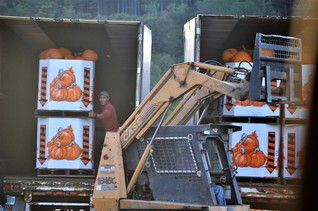 loading wholesale pumpkins