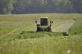 Big M mowing grass