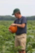 Checking pumpkin
