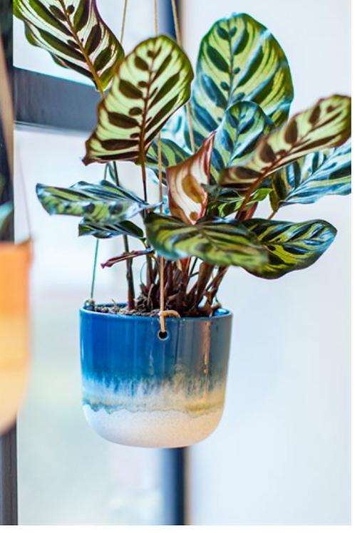 Sass & Belle Mojave blue hanging planter