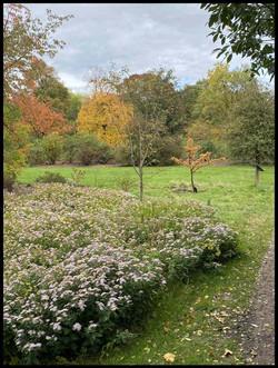Herfstbloesem Arboretum