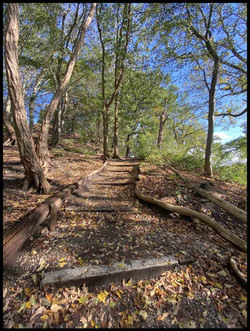 Trappetjesbos bij Arboretum