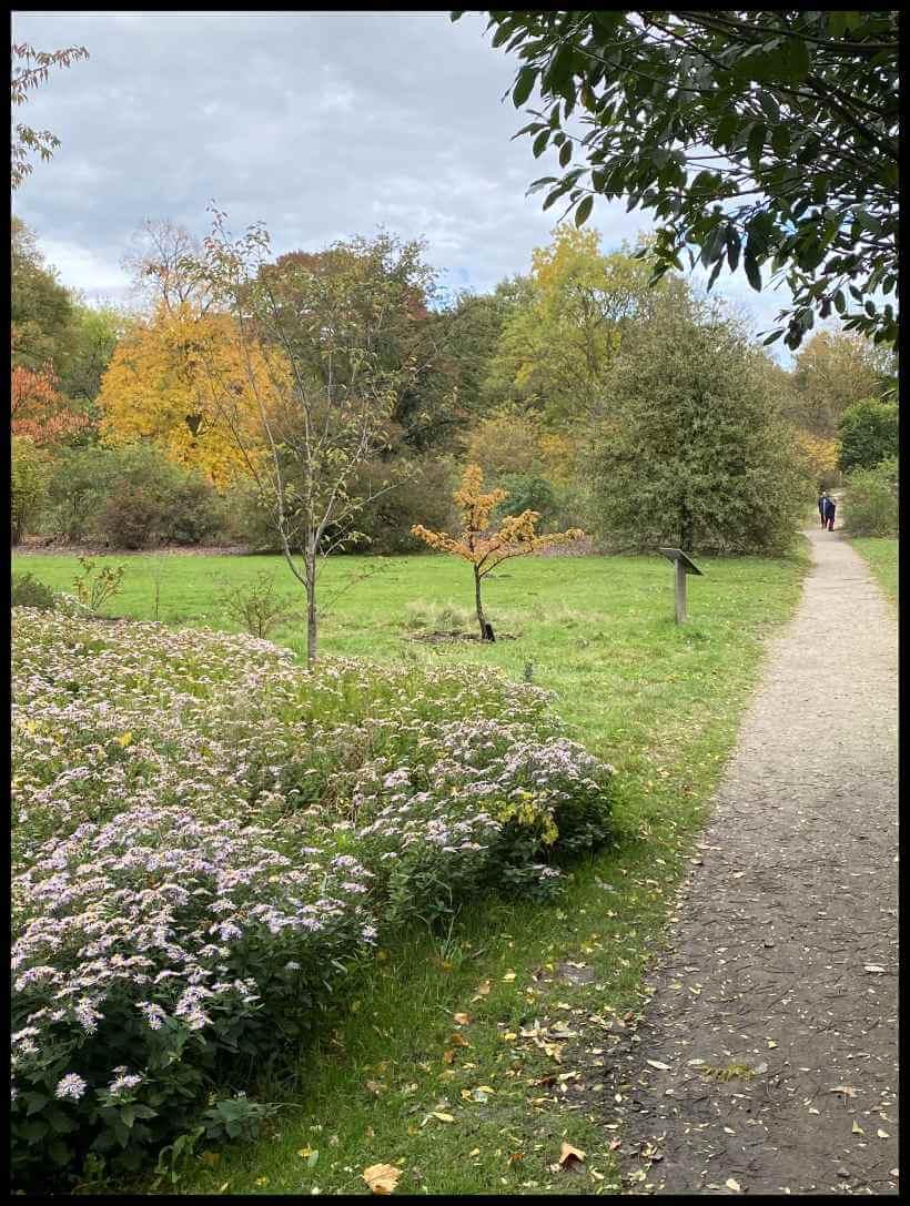 Herfst in Arboretum