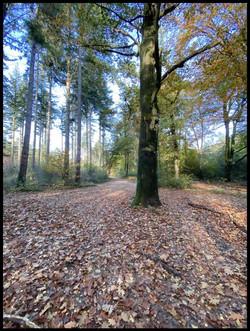 Bos bij Nol in het Bosch
