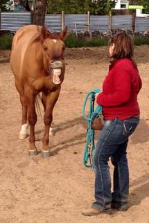 horse facial release