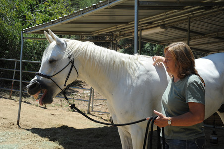 equine acupressure withers