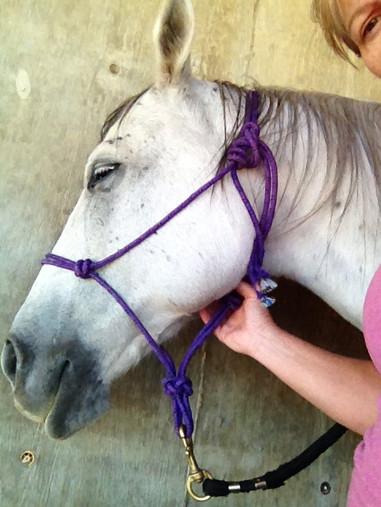 horse relaxing