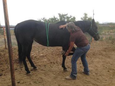 equine massage legs