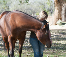 equine therapy and massage