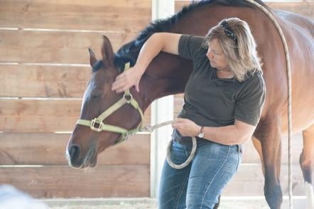 equine acupressure