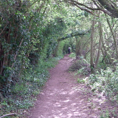 Track near Boughton Aluph church