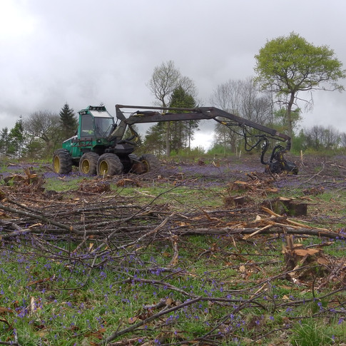 Heavy Forestry Equipment is used