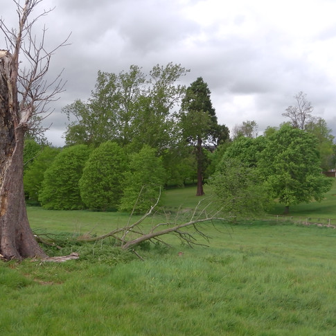 Skirting field near Eastwell Manor