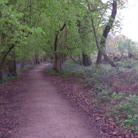 The North Downs Way in forest