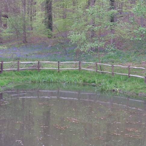 A small pond in King;s Wood