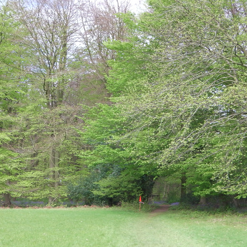 The footpath enters the forest ahead,