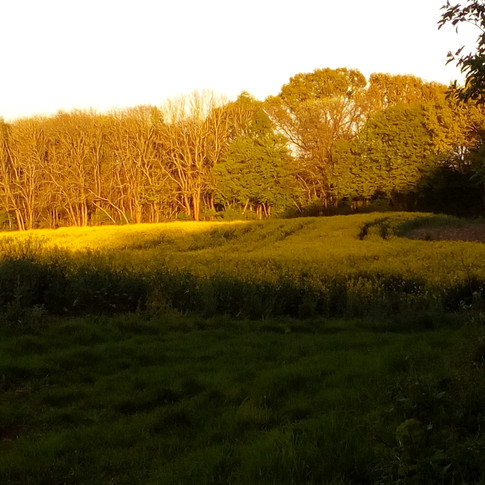Evening sunlight on trees