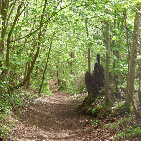Path descending Soakham Down