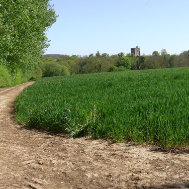 Chilham church tower across wheat field