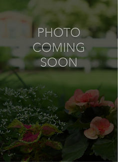 Photo Coming Soon Graphic.jpg