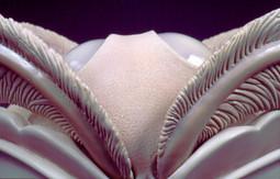 Lunae Lumen detail.jpg