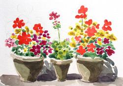 Pots on our terrace